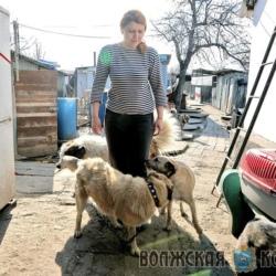 Самарский приют для бродячих животных «Хати» заручился поддержкой Фонда президентских грантов 2