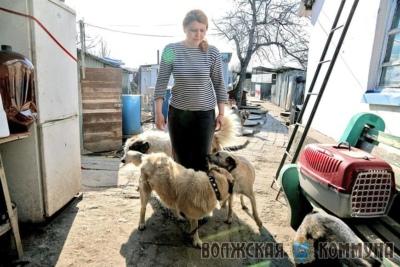 Самарский приют для бродячих животных «Хати» заручился поддержкой Фонда президентских грантов 55